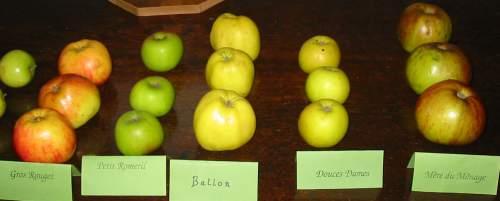 Traditional Jersey Apple Varieties