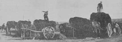 La Vraiqu'sie 1906